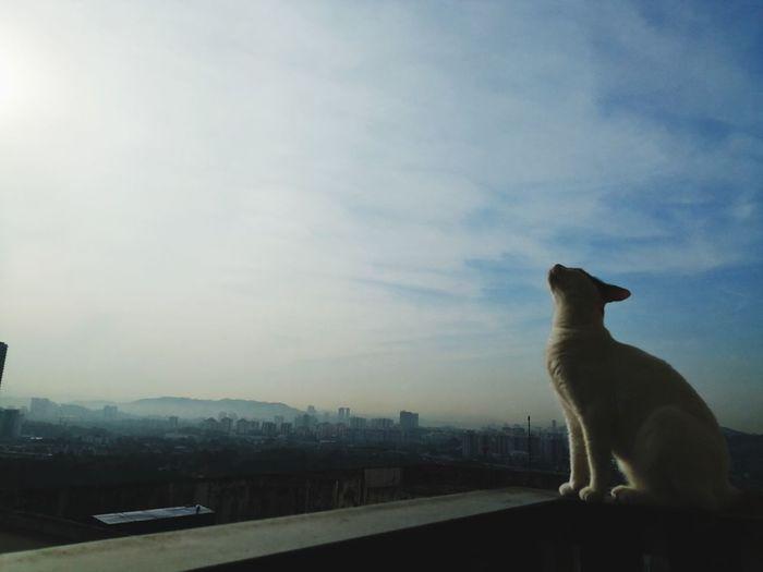 Cat Cute City