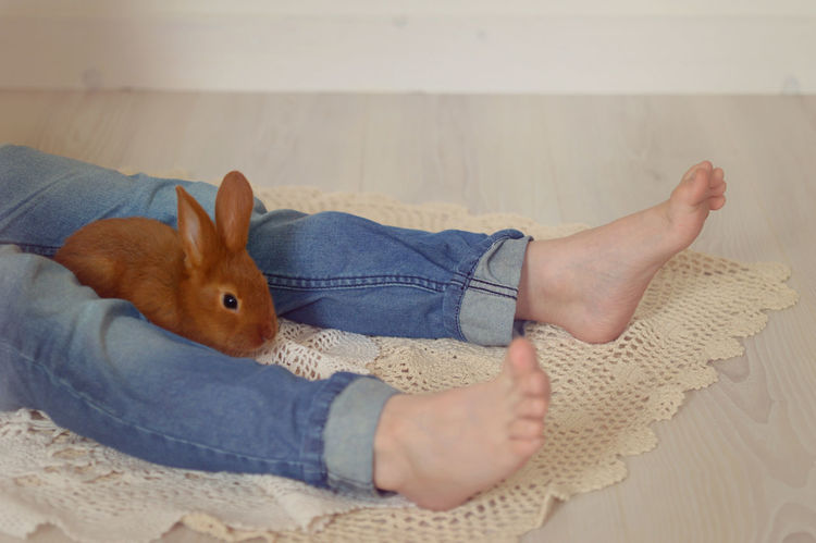 Animal Barefoot Bunny  Jeans Legs Love My Son Rabbit Red