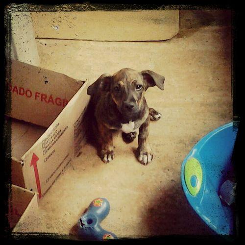 crazy dog Hello World