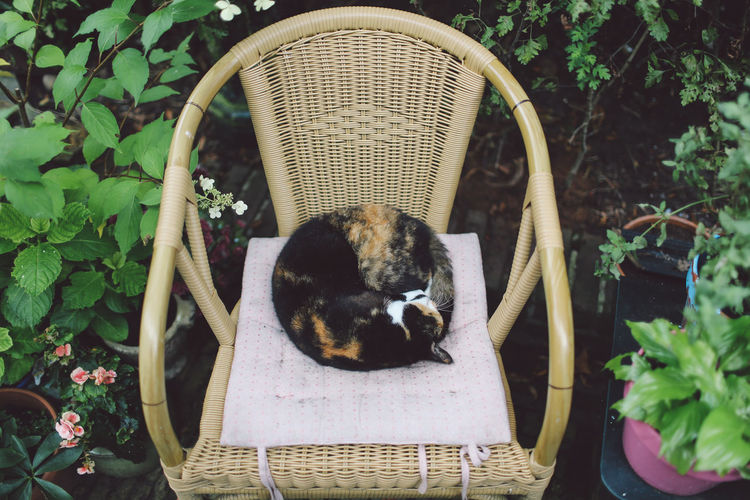 High angle view of cat relaxing on chair in yard