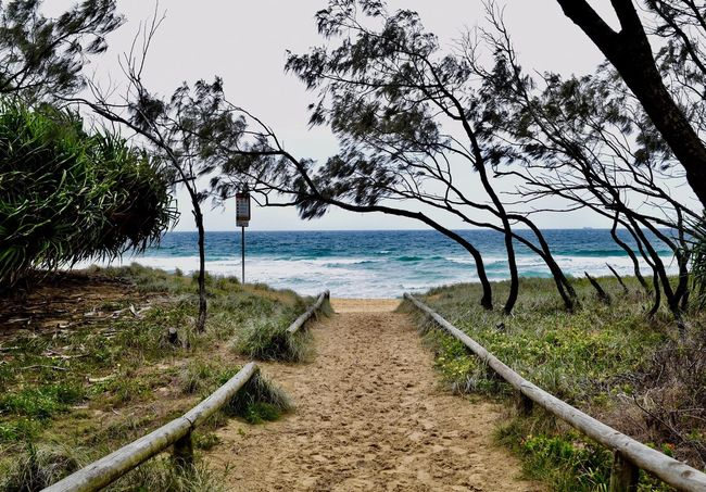 Discovery awaits Sea Tree Water Nature Beach Outdoors Tranquility No People First Eyeem Photo