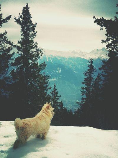 Enjoying The View Steph Filter Weisshorn