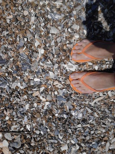 Salt Life Coastal Carolina Sea Shells OBX North Carolina Flip Flops