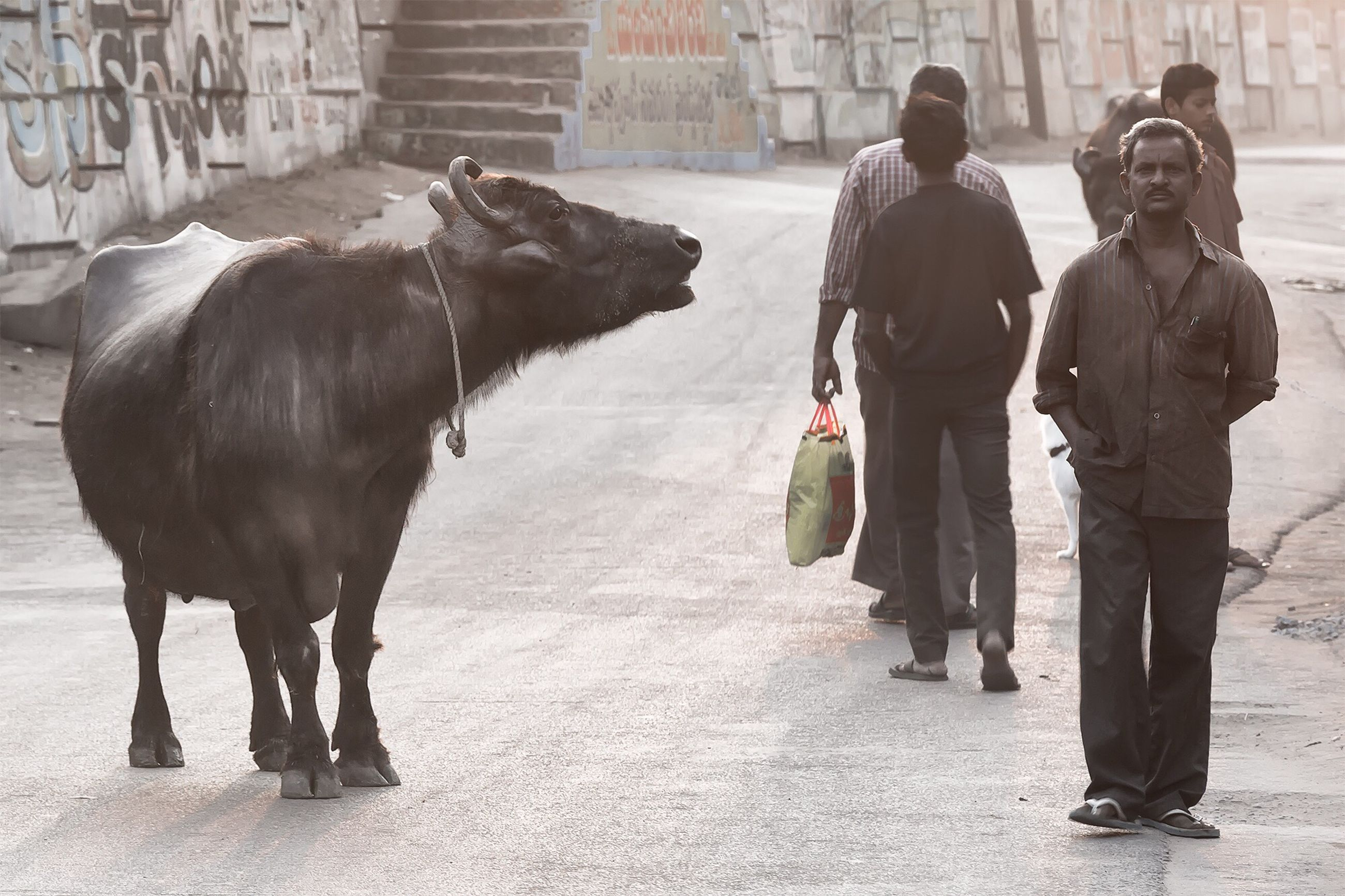 domestic animals, mammal, animal themes, livestock, horse, pets, one animal, working animal, two animals, standing, dog, walking, full length, street, togetherness, men, rear view, herbivorous, cow