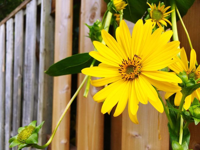 Flower Fragility Petal Yellow Growth Freshness Plant Flower Head Beauty In Nature Nature Leaf Day Close-up Blooming No People Outdoors