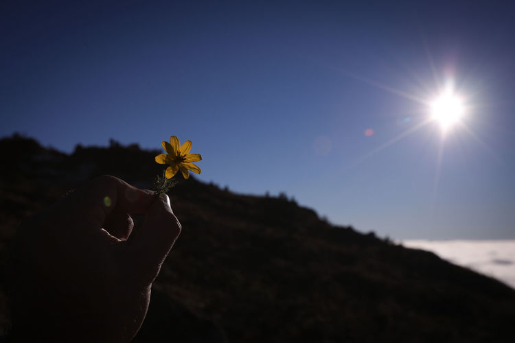 Sky Flower Nature Plant Flowering Plant Sunlight Human Body Part Human Hand Hand Lens Flare Sun One Person Beauty In Nature Freshness Holding Yellow Close-up Fragility Body Part Clear Sky Outdoors Finger Flower Head Bright