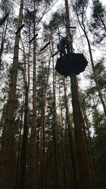 Treeclimbing Dontlookdown Goape Day Out Trees Sohigh