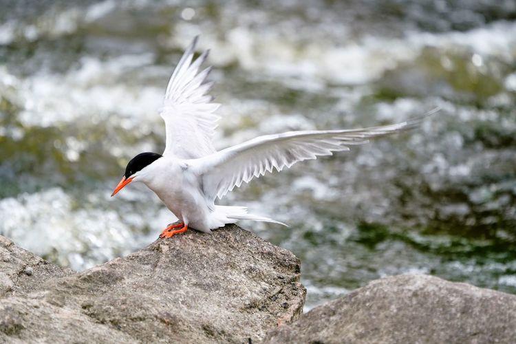 Bird perching on rock at river