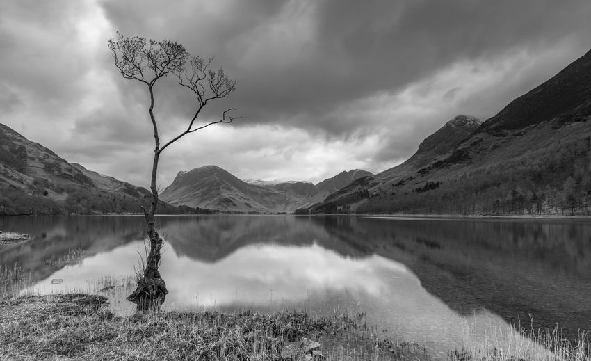 The famous lone tree at Buttermere with some nice reflections on the water. Lone Tree Moody Sky Reflection Beauty In Nature Black And White Buttermere Cloud - Sky Idyllic Lake Mono Mountain Mountain Range Nature No People Non-urban Scene Plant Reflection Reflection Lake Scenics - Nature Sky Snowcapped Mountain Tranquil Scene Tranquility Tree Water