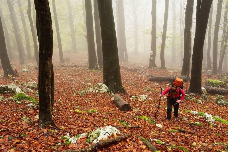 Nikon Autumn Autumn Autumn Collection Day Fall Forest Landscape Landscape_Collection Landscape_photography Nature Outdoors Tree Tree Trunk Trek Trekking