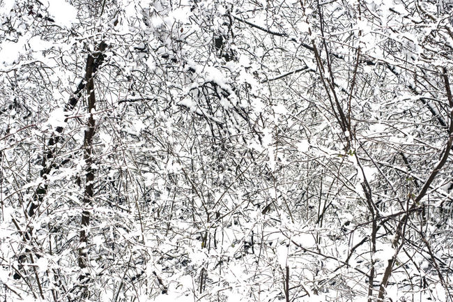 Chaos Backgrounds Bare Tree Beauty In Nature Branch Branches And Snow Branches Of Trees Cold Temperature Day Full Frame Growth Land Low Angle View Nature No People Outdoors Plant Snow Snowing Tranquility Tree White White Color Winter