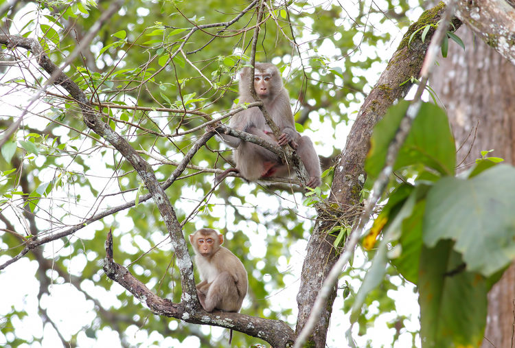 Tree Plant Animal Wildlife Animals In The Wild Animal Themes Animal Branch Primate Mammal Monkey Vertebrate Low Angle View Group Of Animals Nature Day No People Growth Two Animals Sitting Outdoors Animal Family