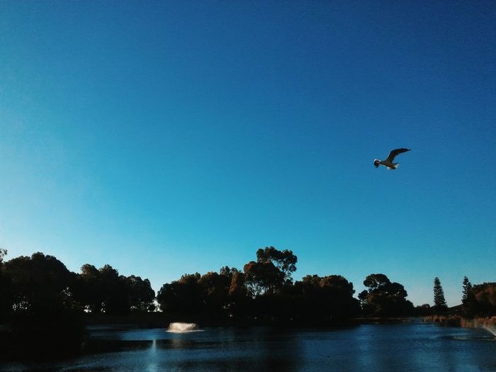 I'm free as a bird when I'm flying inside your cage. EyeEmNewHere EyeEm Nature Lover Eyemphotography Eye4photography  EyeEm Gallery Mobilephotography Asus Asus Zenfone Photography Bird Tree Water Spread Wings Flying Clear Sky Lake Blue Bird Of Prey Silhouette