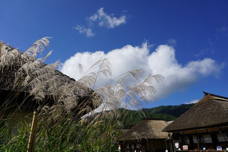 Grass Sky And Clouds Blue Sky Sunny Day Sky Cloud - Sky Nature Built Structure Plant Architecture Outdoors