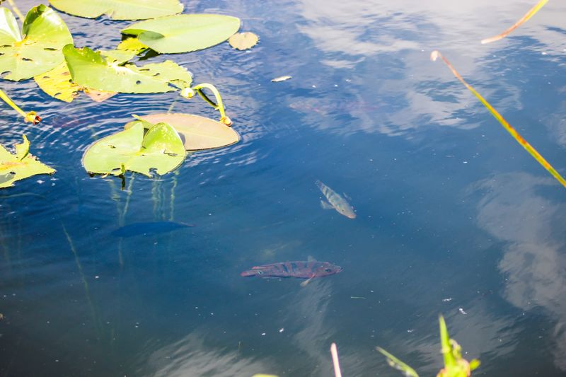 High angle view of fish in lake