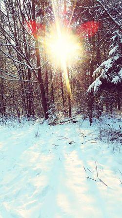 Sarah7790 Winter Schnee Sonnenuntergang Waldspaziergang Schneelandschaft Kalt Jahreszeit Cold Temperature Sunlight Nature No People Snow Sun Tree Outdoors Sunbeam Beauty In Nature Day Scenics Sky