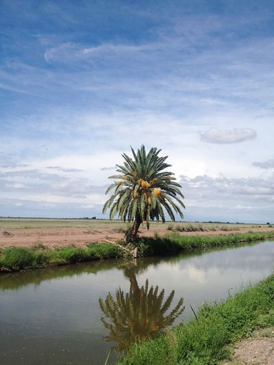 Date palm tree by canal and landscape against sky