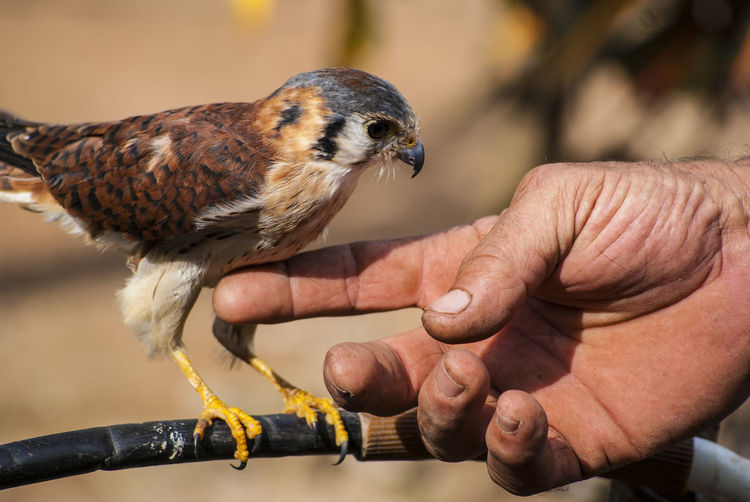 Cropped Image Of Hand Touching Bird