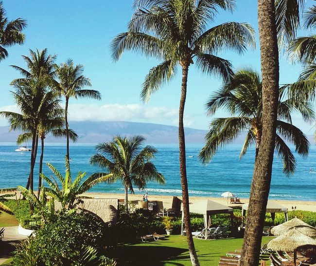 Backgrounds Full Frame Beauty In Nature Tranquil Scene Hawaiian Islands Maui Hawaii Travel Destinations Travel Beach Island Sea Wave Water Tree And Sky Palm Tree And Sky Beauty Of Nature Day Live For The Story The Street Photographer - 2017 EyeEm Awards