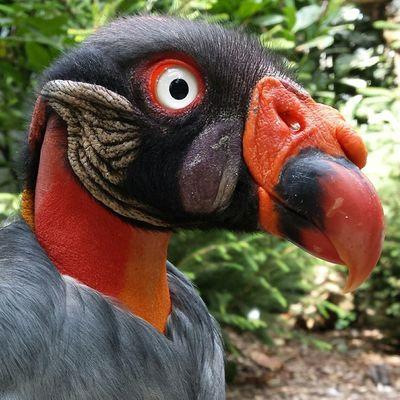 Vulture Birdsofprey Birds Wild Wildlife Nature Naturephotography Naturewhisperers BirdLovers Beautifulnature