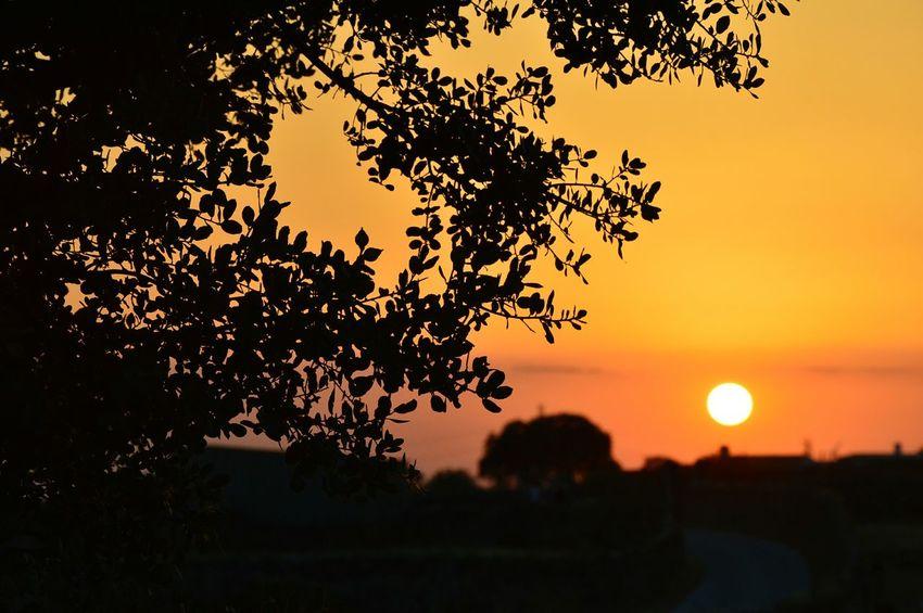 Sunset Taking Photos Cáceres Nikon D3200 Fotography Enjoying Life Sun Landscape_photography Relaxing