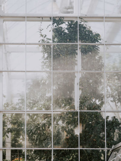 Glasshouse Plant Tree Window Nature Day Glass - Material Architecture Built Structure Reflection No People Building Exterior Transparent Growth Outdoors Snow Cold Temperature Pattern Winter Full Frame Snowing Greenhouse Glasshouse