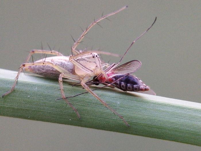 Macro Photography Spider Macro Macro Nature Mosquito