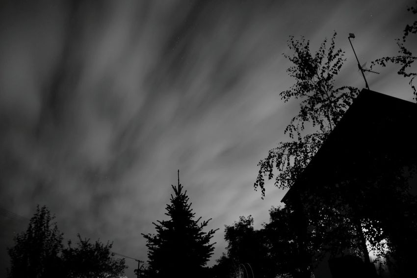 Monochrome Photography Sky Silhouette Star Field Tree Atmospheric Mood Outdoors Natural Phenomenon Night Low Angle View Dramatic Sky High Section Treetop Atmosphere Astronomy Star - Space Cloud Infinity Cloudy Galaxy