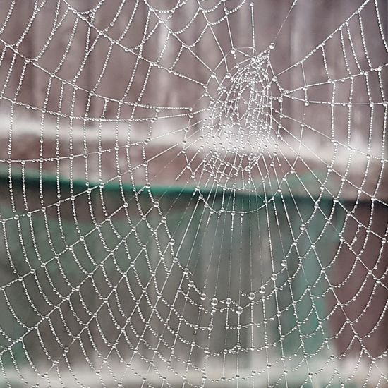 Wet spider's web Web Backgrounds Spider Web Complexity Intricacy Water Close-up Water Drop Droplet Detail