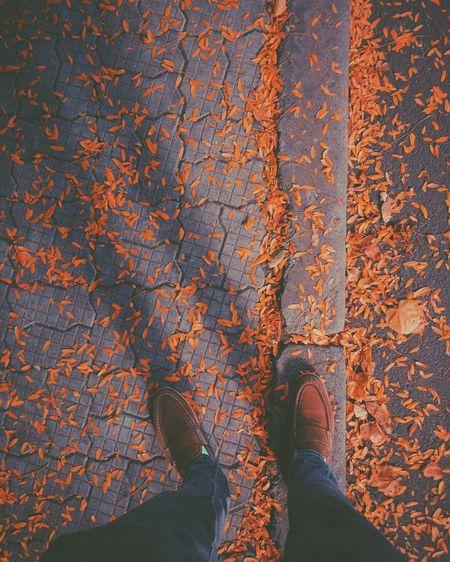 Autumn vibes Autumn Leaves Fashion Autumn Colors Creative Light And Shadow