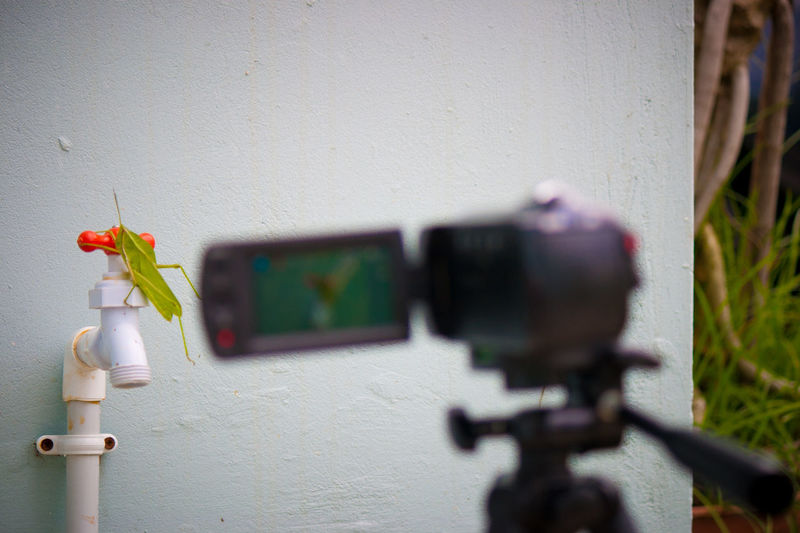 Focus On Foreground Grasshopper Insect Paparazzi Insect Photography Photography Recording Session Technology Videoshoot