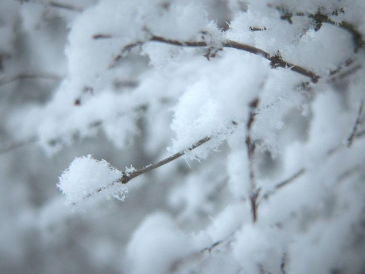 Snow Winter B&w Black & White Finland