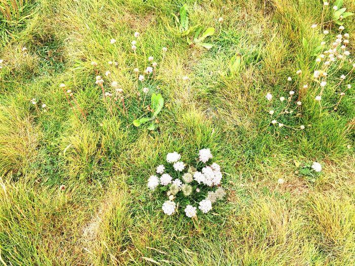Wild Flowers Field Crantock Newquay