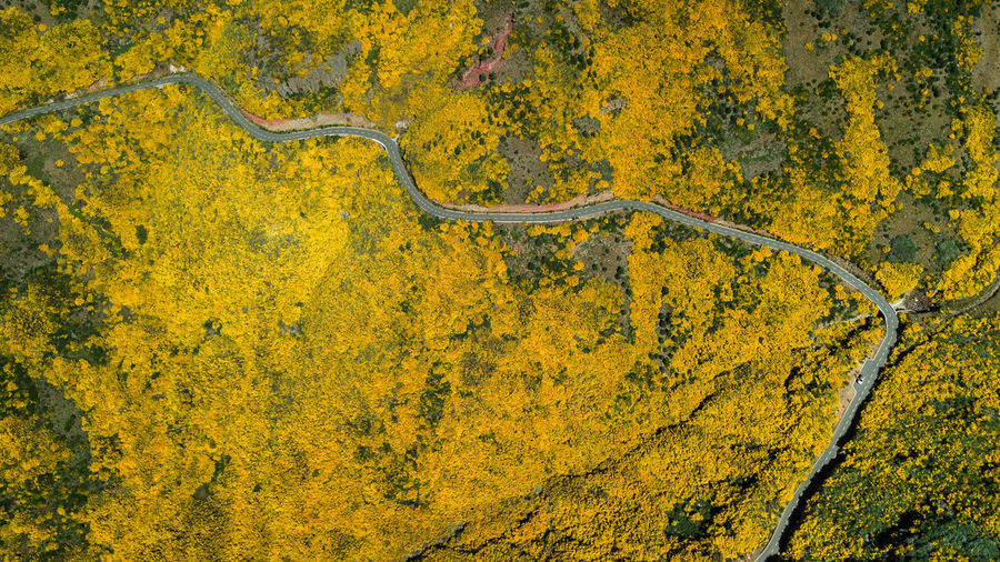 Aerial drone view of Areeiro road on a sunny day with gorse flower in bloom in Madeira island, Portugal Gorse Road Summer Grass Hill Nature Tourism Tourist Attraction  Tourist Destination Street Tree Yellow Yellow Flower Madeira Madeira Island Mountain Mountain Peak Mountain View Environment Environmental Conservation Europe Forest Hiking Panoramic Panoramic View Drone  Dji DJI Mavic Pro DJI X Eyeem Above Above View Travel Travel Destinations Landscape Beauty In Nature Rural Scene Country Road Outdoors Scenics - Nature Blooming In Bloom Pico Do Arieiro Majestic Majestic Nature Aerial View Aerial Photography Car Adventure Journey Still Life