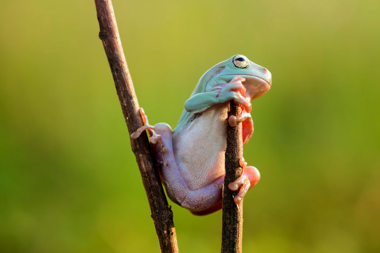 dumpy frogs, dumpy frogs on a log Activity Animal Animal Themes Animal Wildlife Animals In The Wild Close-up Day Fish Focus On Foreground Food Green Color Hanging Holding Nature No People One Animal Outdoors Plant Vertebrate 10