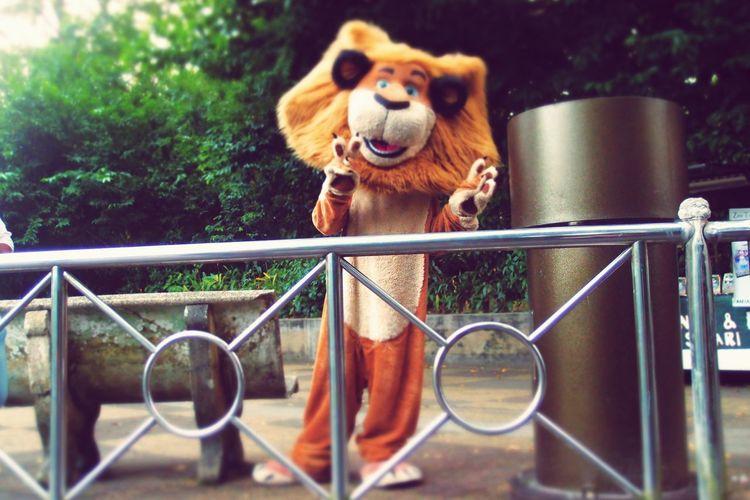 EyeEm Selects Outdoors Day ZooLife Zoopark Zoophotography Zoomalaysia Mascots Mascot Mascotlion