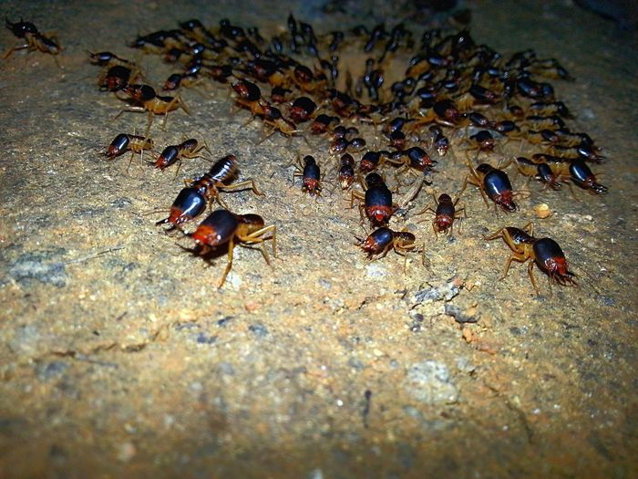A group of ant