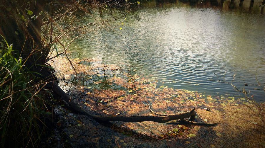 Autumn Autumn Colours Autumn 2015 Pond Water Ripples Sunlight Tree Branches Autumn Leaves Fallen Leaves Leaves Leaves In Water Nature Nature Photography EyeEm Nature Lover In The Park HTC One