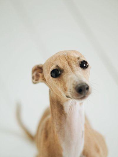 Close-up of portrait of dog