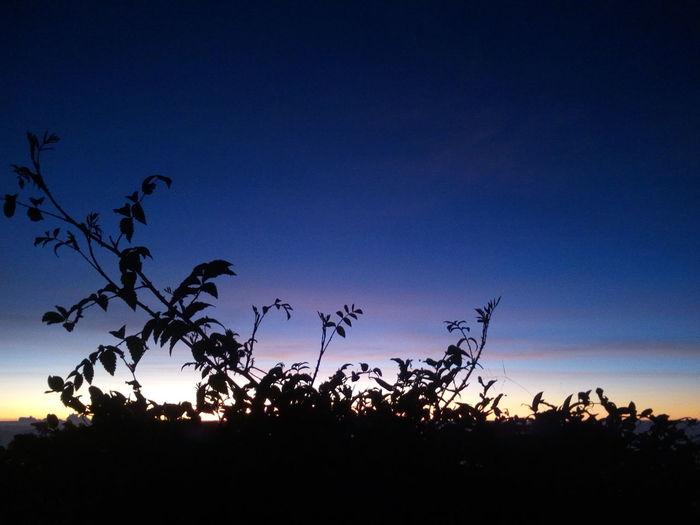 Silhouette plants against sky at dusk