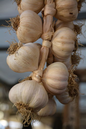 Close-up of garlic