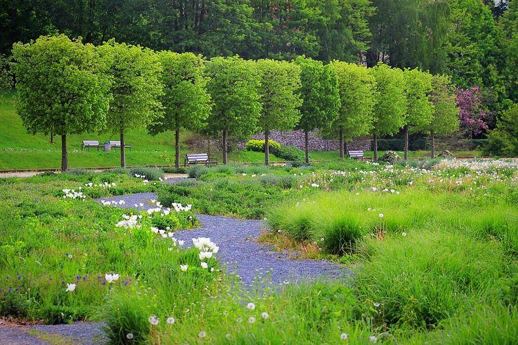 Trees Growing On Grassy Field