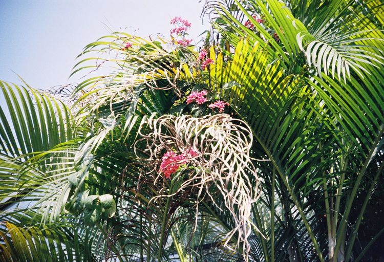 Green Color Nature Growth No People Palm Tree Day Tree Leaf Beauty In Nature Plant Flower Freshness