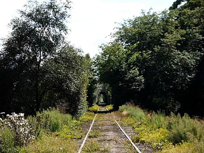 Sanagustin Railroad Track Tree Rail Transportation Transportation The Way Forward Straight Growth Diminishing Perspective Plant Railway Track Tranquility Tranquil Scene Nature Sky Day Long Green Color Branch Track Scenics Tranquility Nature History Buenos Aires, Argentina