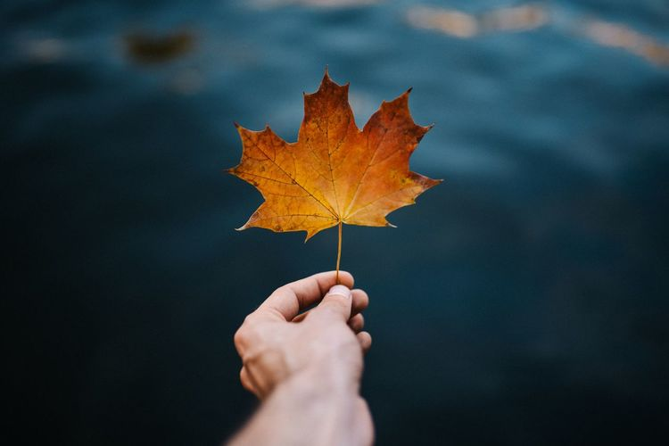Maple 🍁 Brandenburg Lifestyles EyeEmNewHere EyeEmBestPics EyeEm Best Shots Fall Berlin Backround Blue Water Autumn Human Hand Human Body Part Hand Plant Part Leaf Maple Leaf One Person Change Nature Holding Personal Perspective Close-up Body Part Unrecognizable Person Finger Human Finger Plant Dry Outdoors A New Beginning A New Beginning Autumn Mood