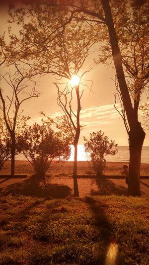 ☀🌲 Happyday♥ Tree And Sky Sea Sealove Sunny Day