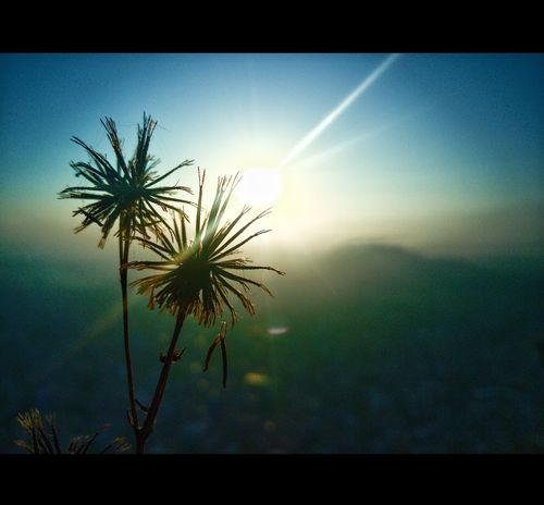 Sun Beauty In Nature Growth Low Angle View Sky Day Freshness sunrise Close-up Plant