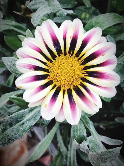 Flower Art is