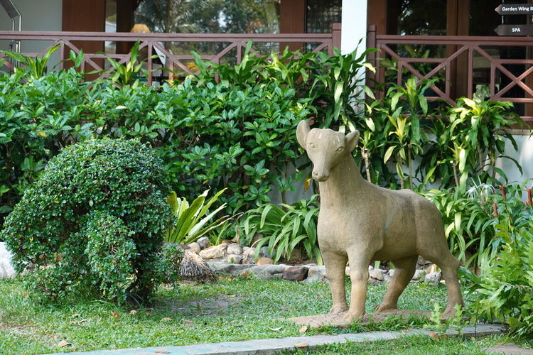 Side view of an animal against plants