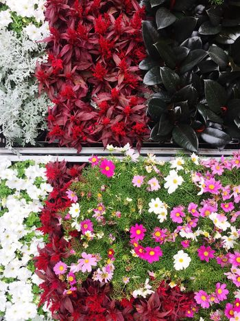 Full of flowers Flower Flowering Plant Plant Fragility Vulnerability  Red Beauty In Nature Growth Freshness Nature Day Petal Abundance No People Flower Head High Angle View Outdoors Multi Colored Choice Inflorescence
